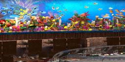 Barrier Reef Restaurant Aquarium Information